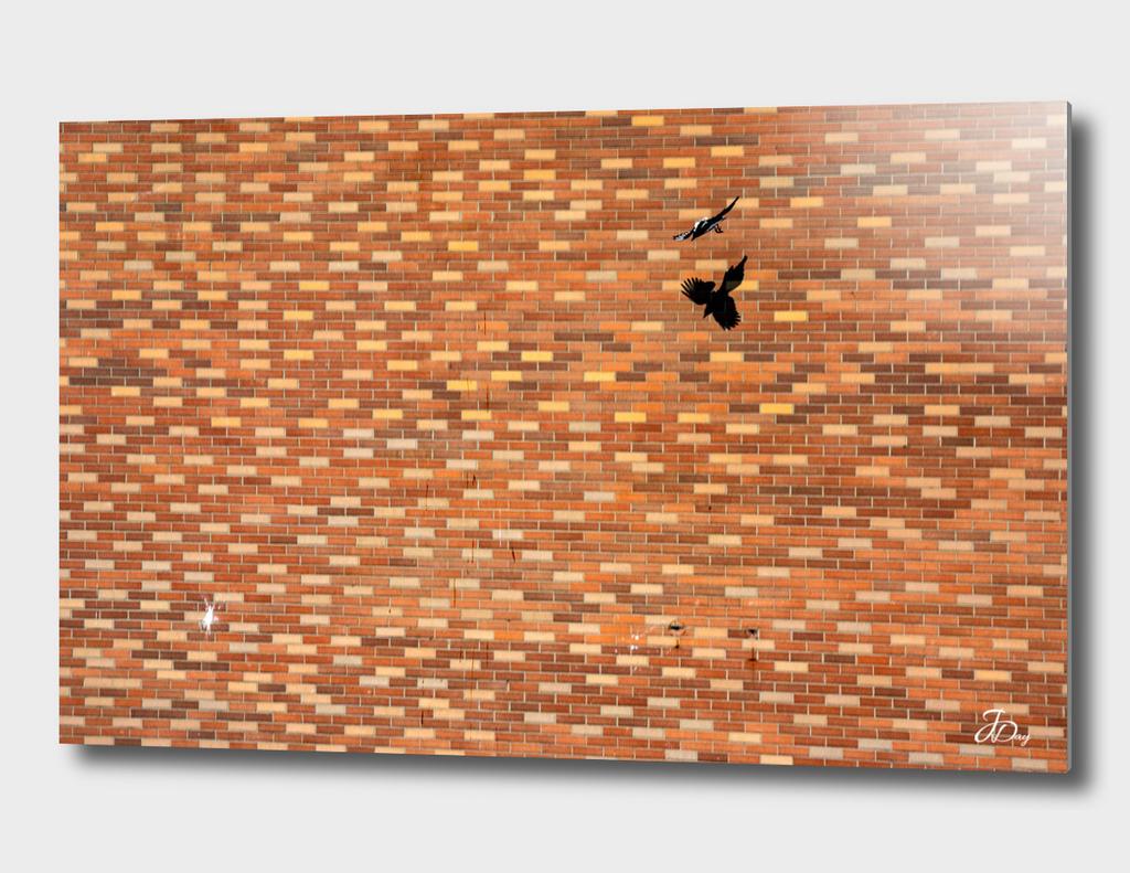 Magpie & Bricks...