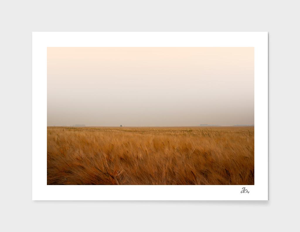 Autumn Wheat...