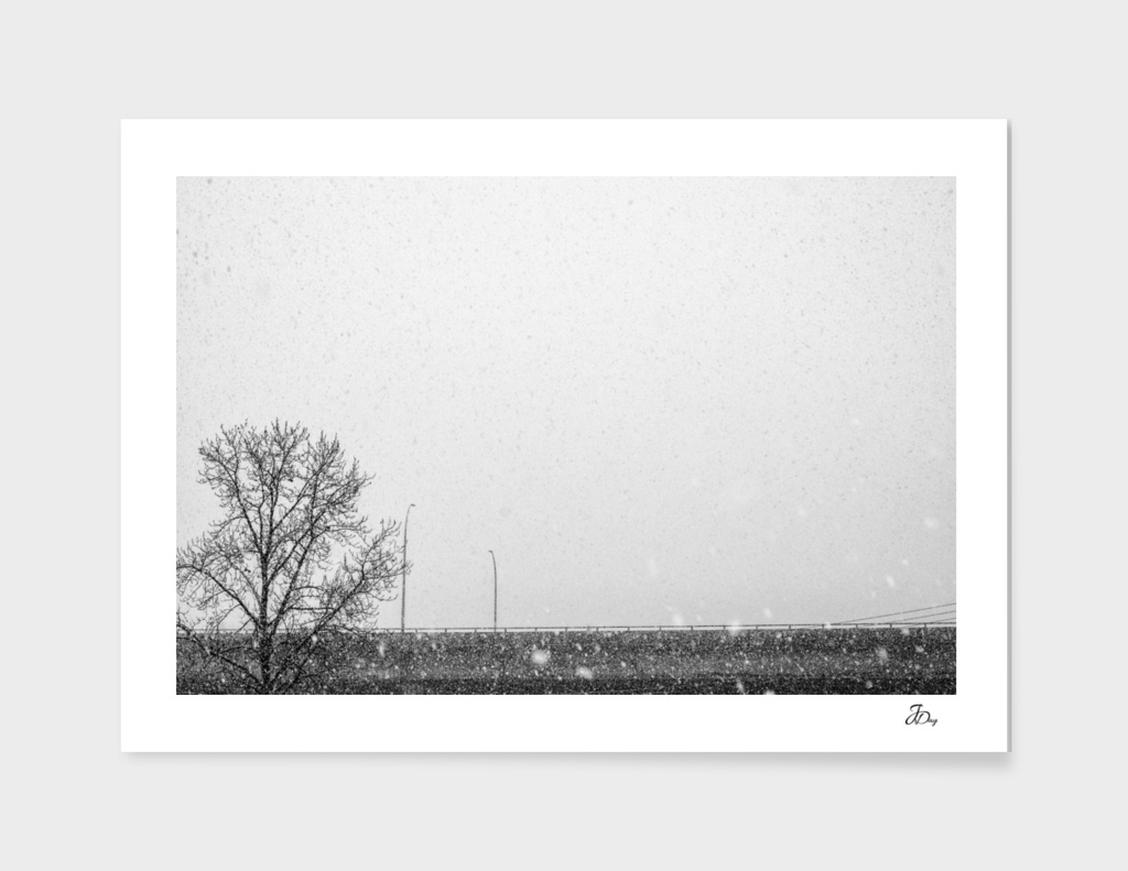 Tree, Bridge, Snow...