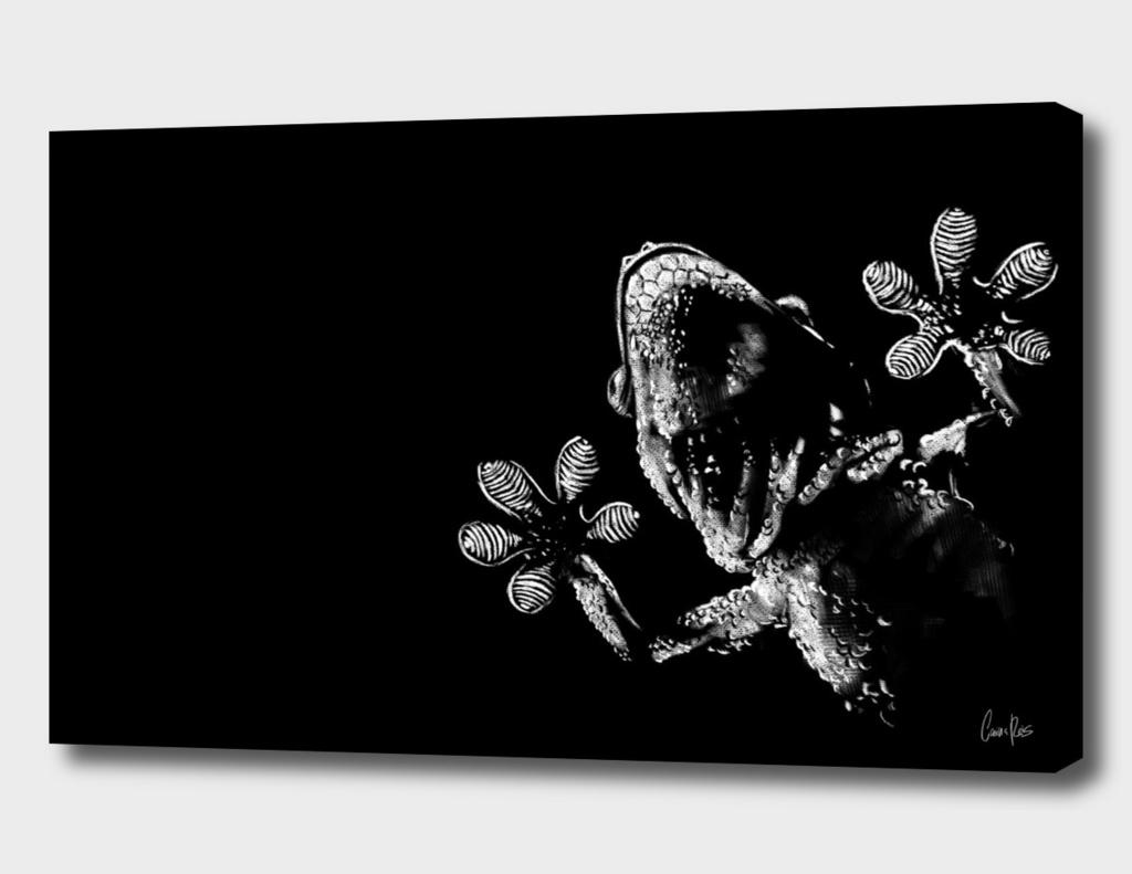 Gecko Pt.1