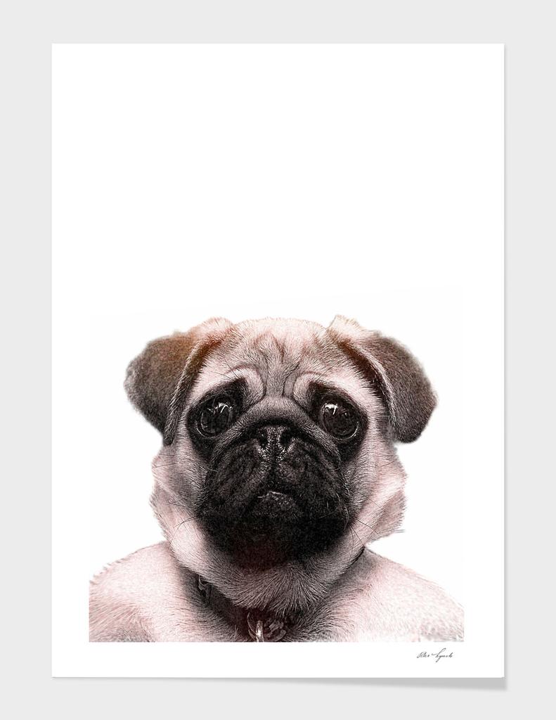 KEEP CALM pug print art pet dog animal puppy cute doggie