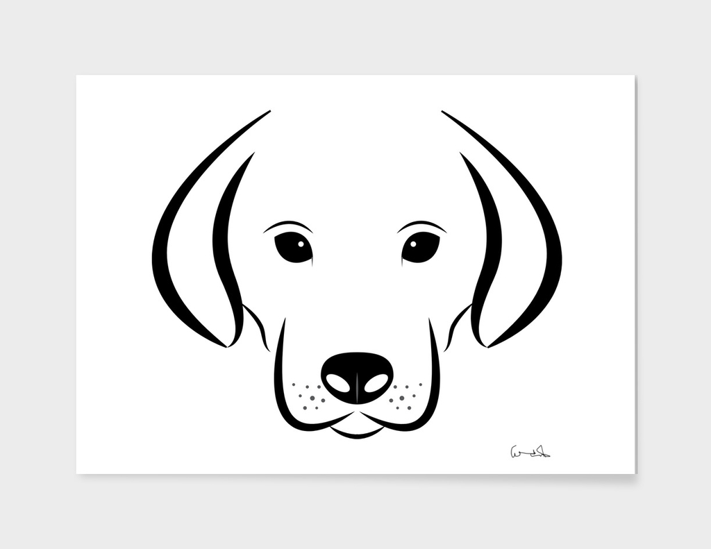 Dog head white background labrador