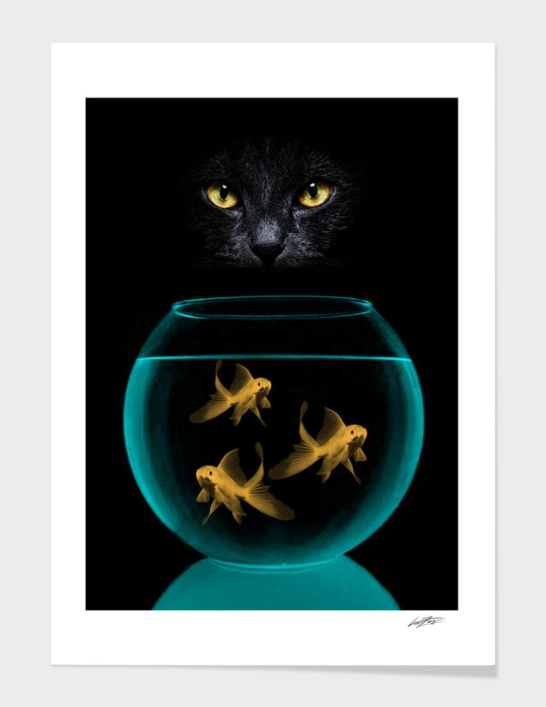 black cat goldfish