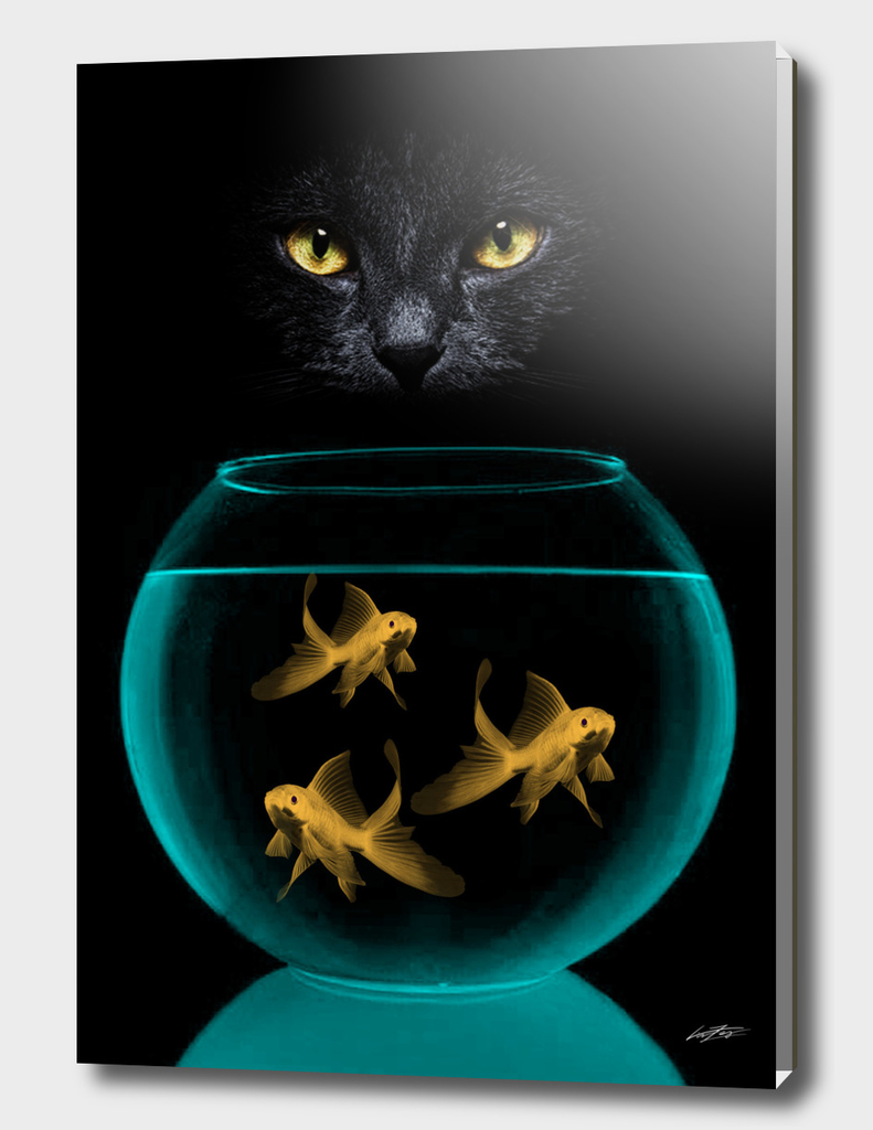 black cat goldfish