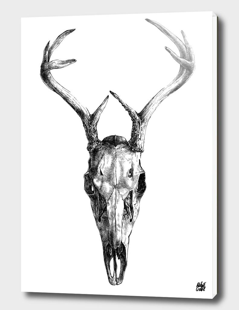 Deer v.01