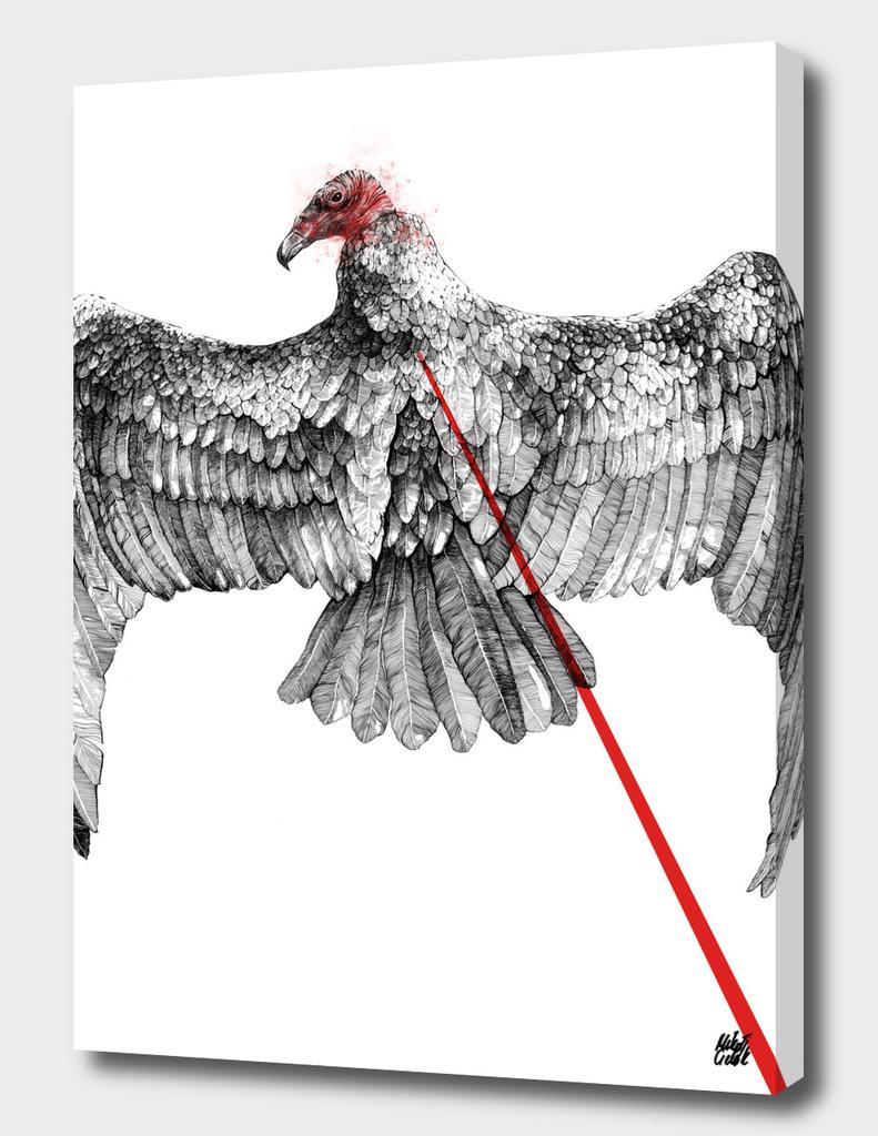 Vulture v.01