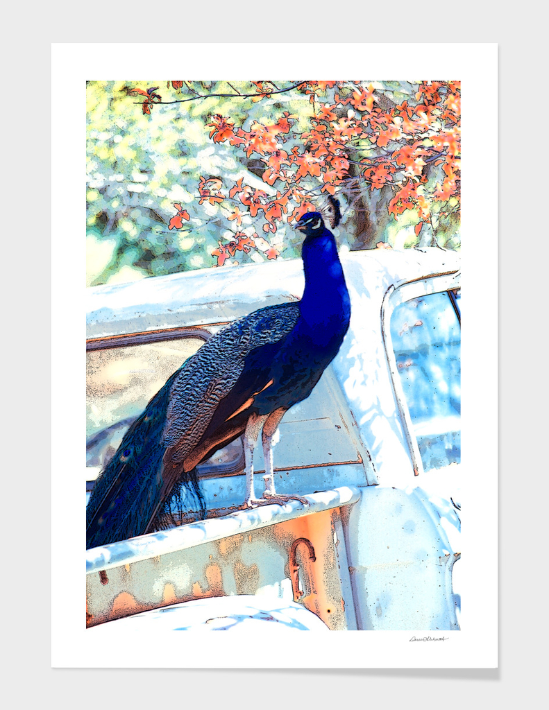 The Peacock and The Pickup
