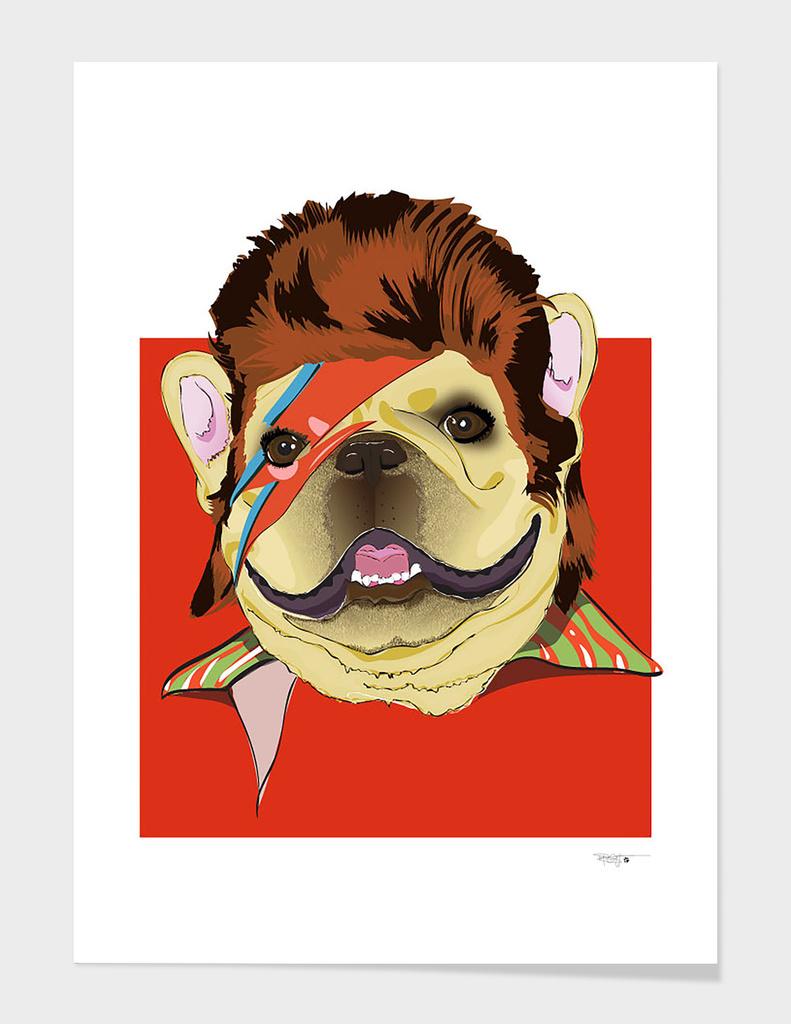 Ziggy-Frenchie