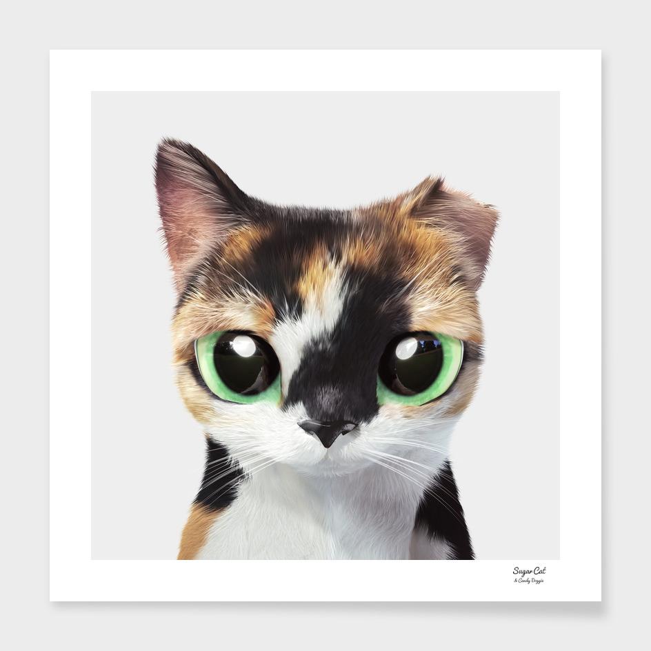 Furi the stray cat