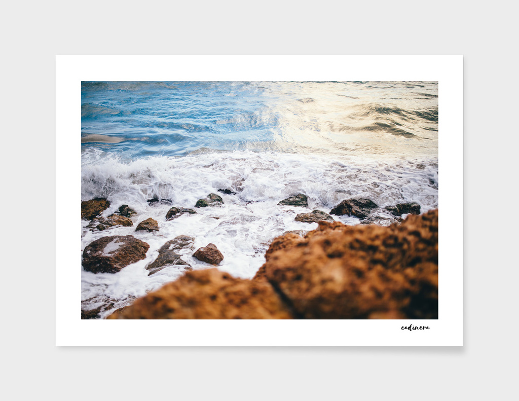 Wild Summer #curioos #wall #art