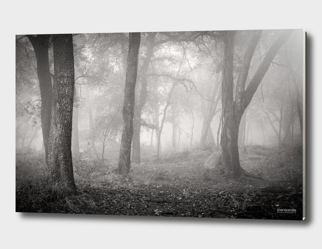 Bosc emboirat (Misty forest)