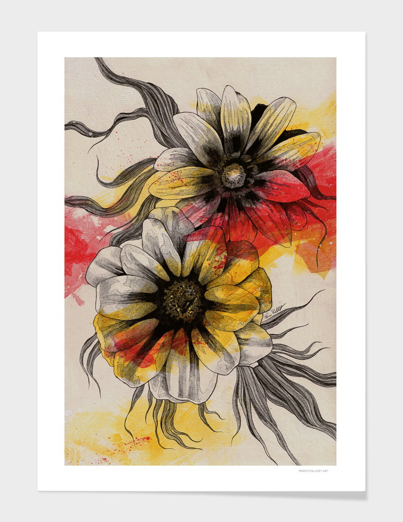 Floral Series: Gazania Rigens