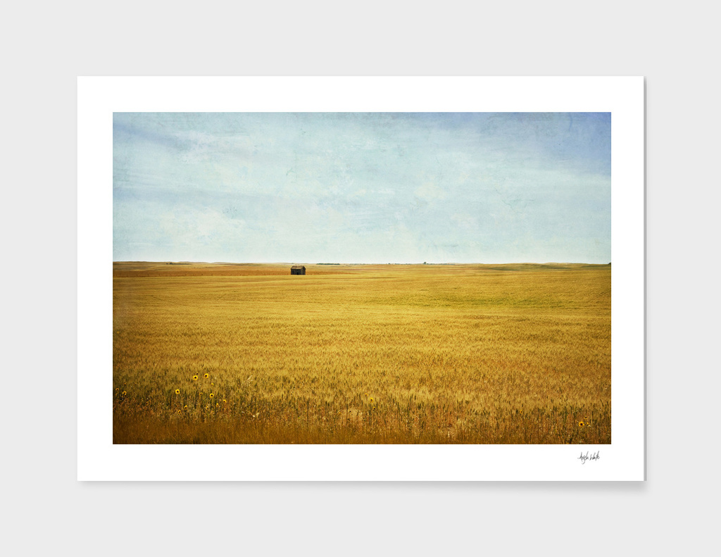 Missing Harvest
