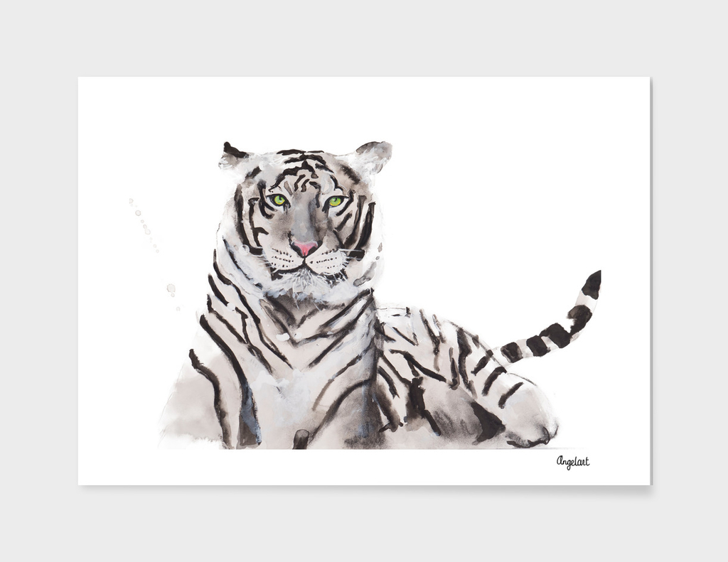 Print of a white tiger, special animal illustration