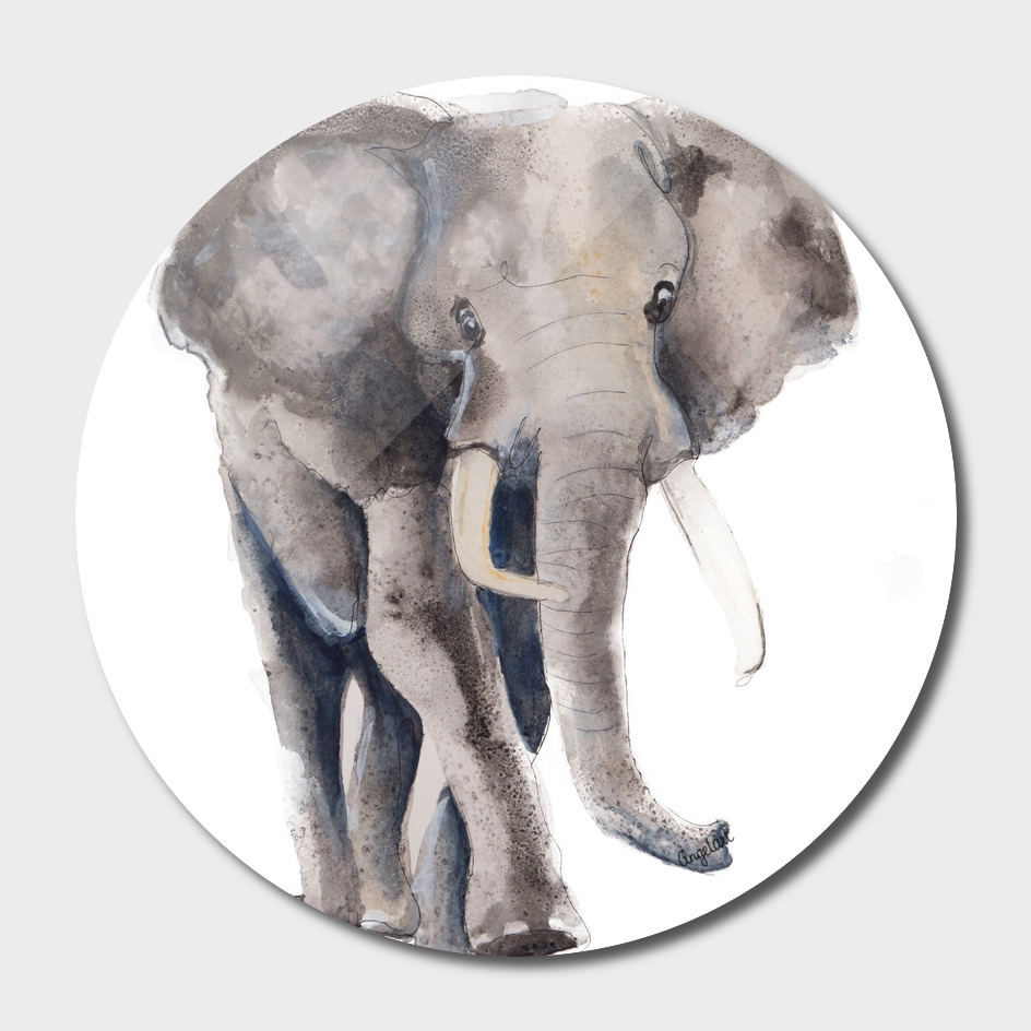 Print of an elephant, special animal illustration