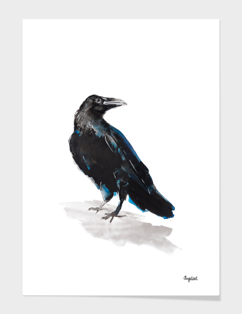 Jackdaw special bird illustration