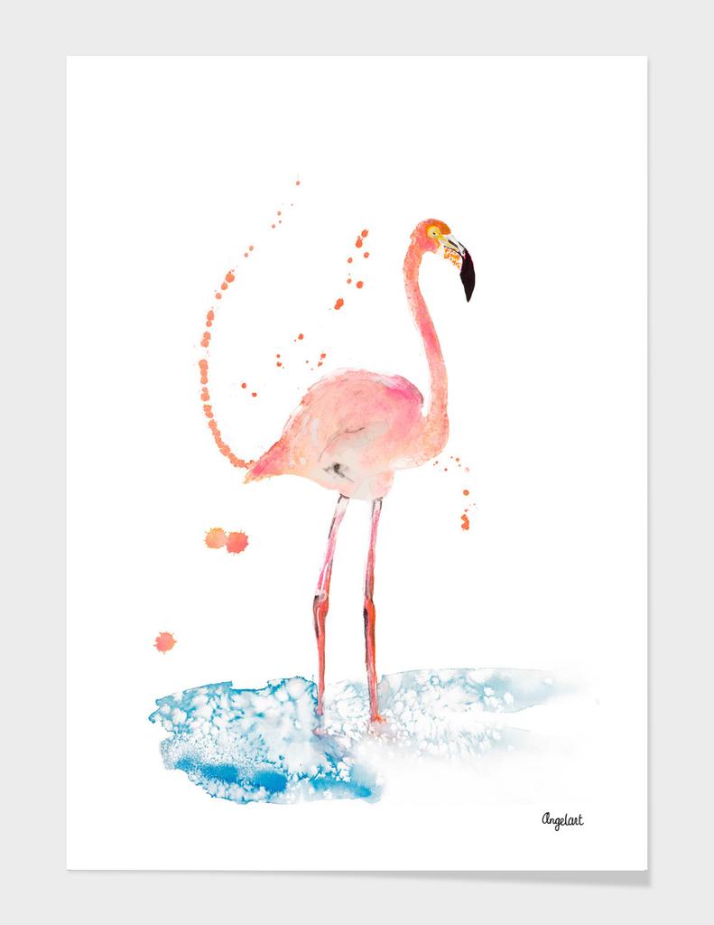 Flamingo special bird illustration