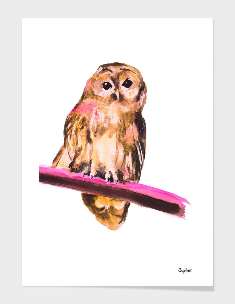 Owl special bird illustration