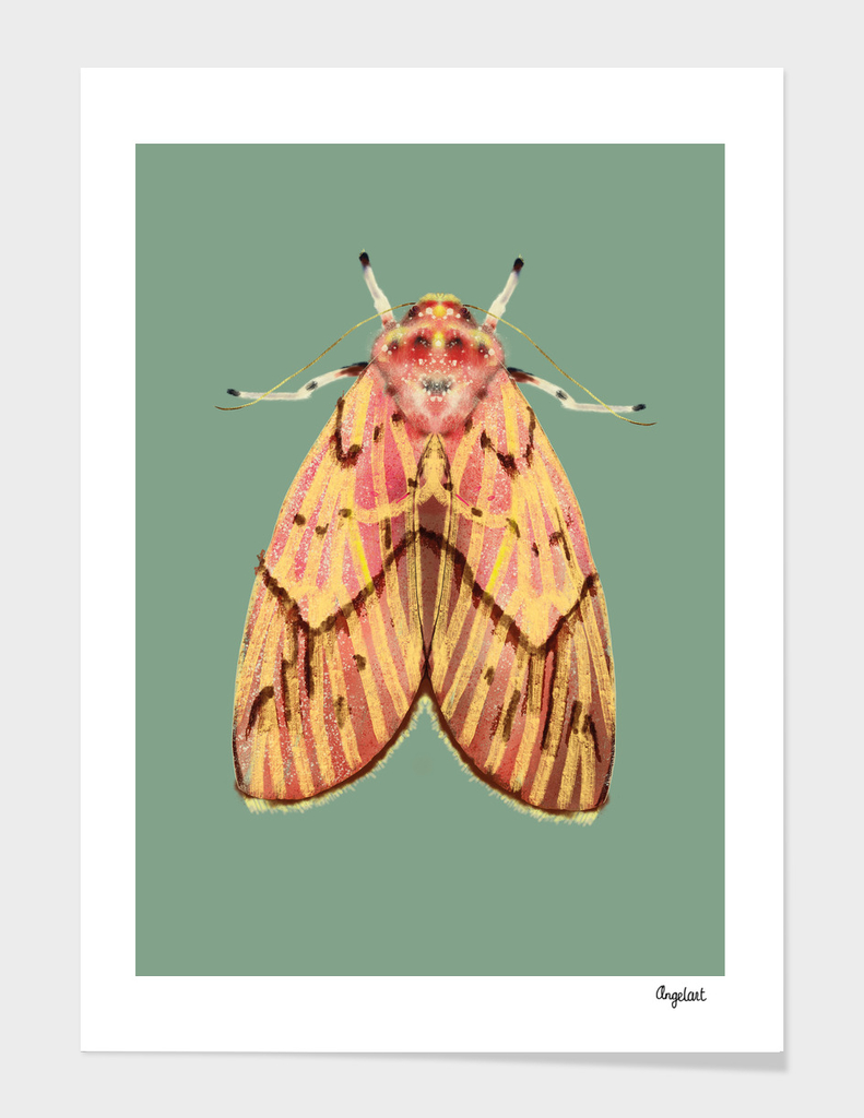 Moth pink yellow on colored background