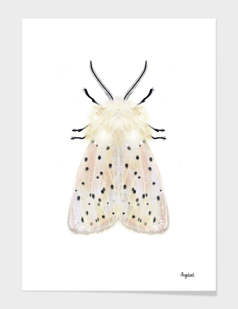 White moth on white background