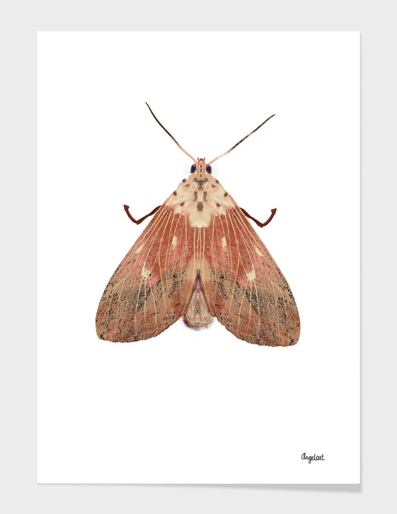 Pink moth on white background