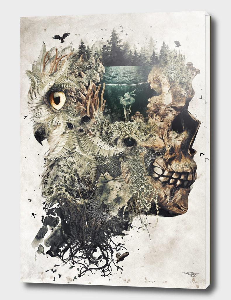 Forest Lake Dreamer