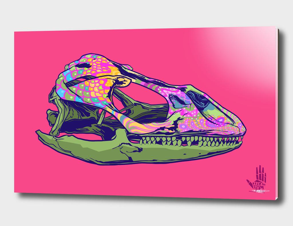 Sugar Gecko