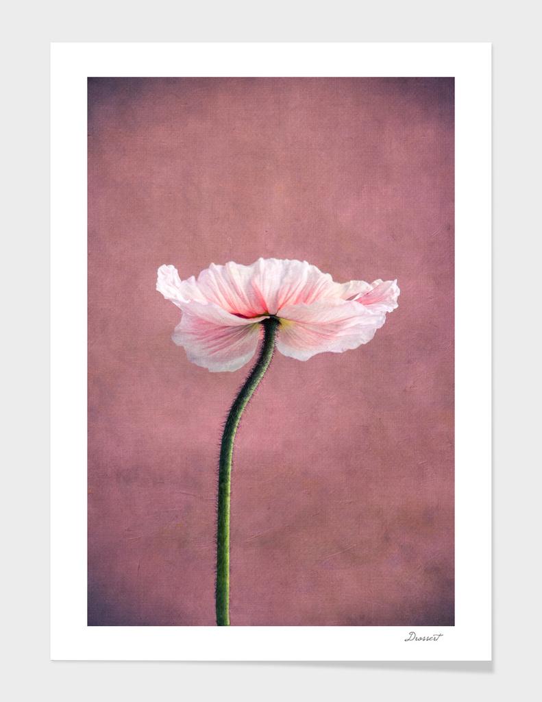 madame poppy