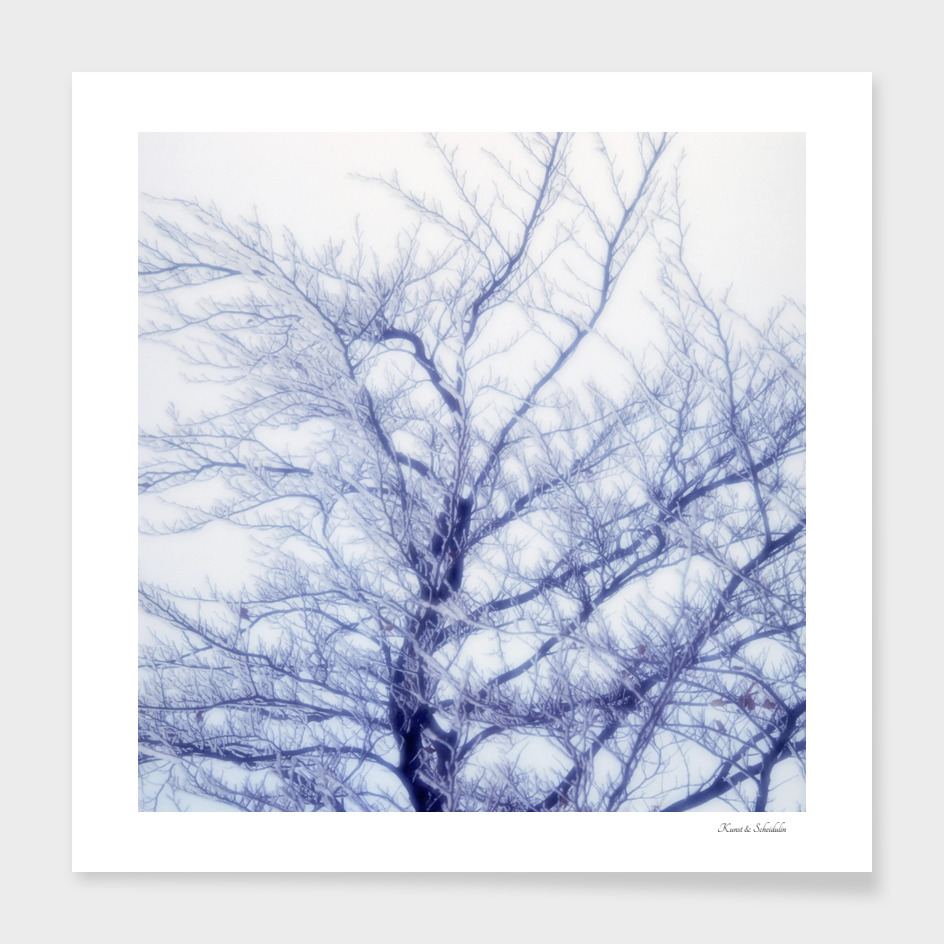 Icy tree in winter