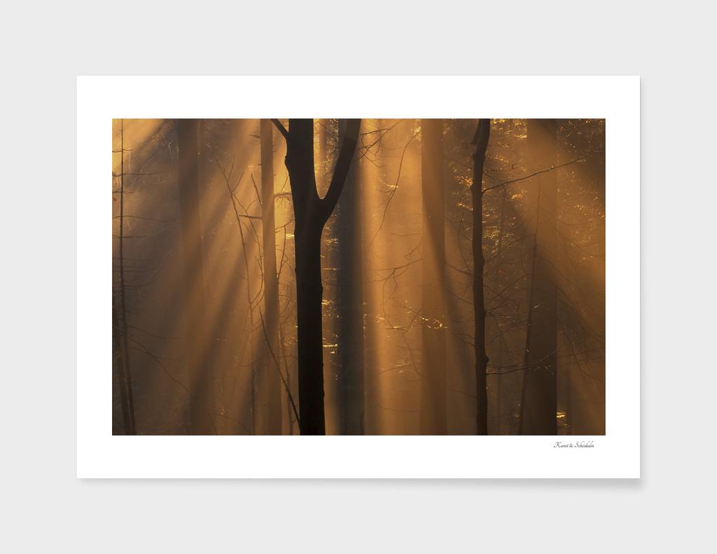 Sunshine in a misty beech forest