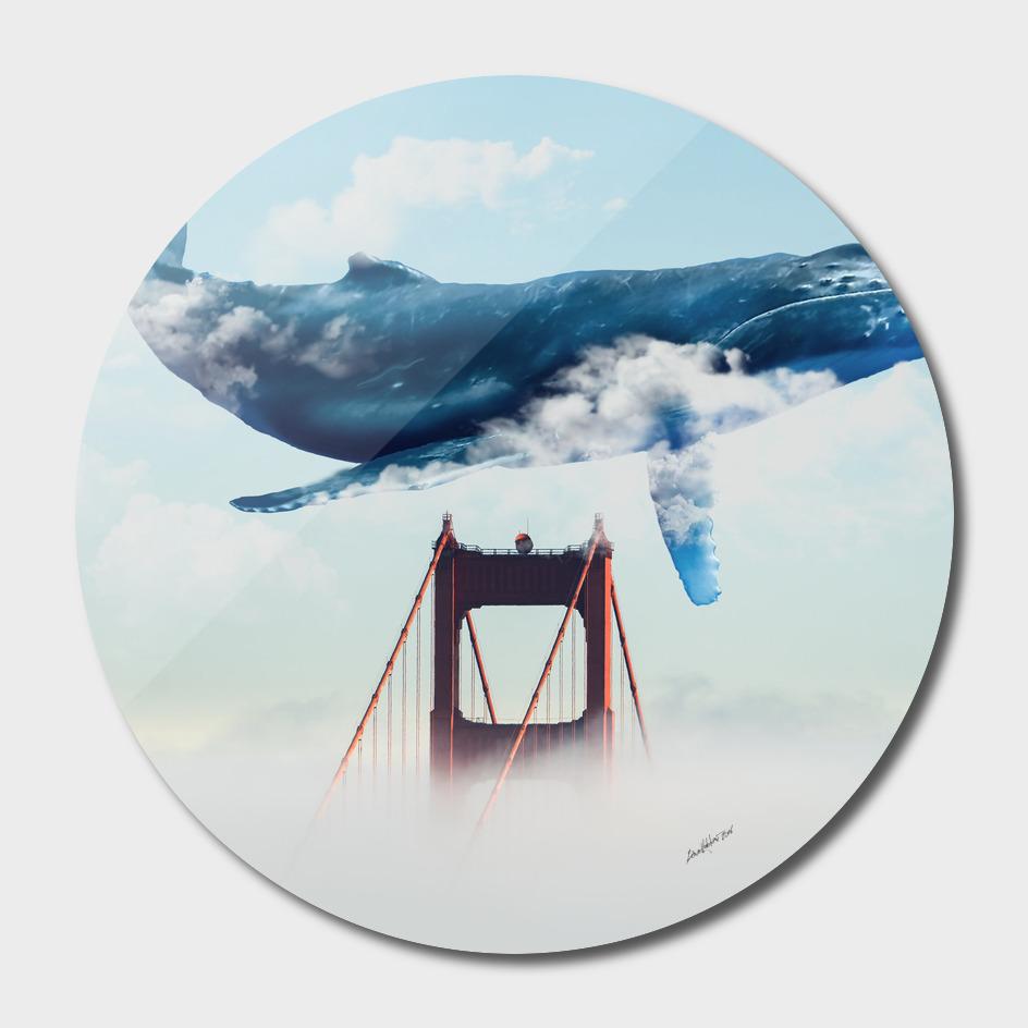 Whale Tails Golden Gate Bridge