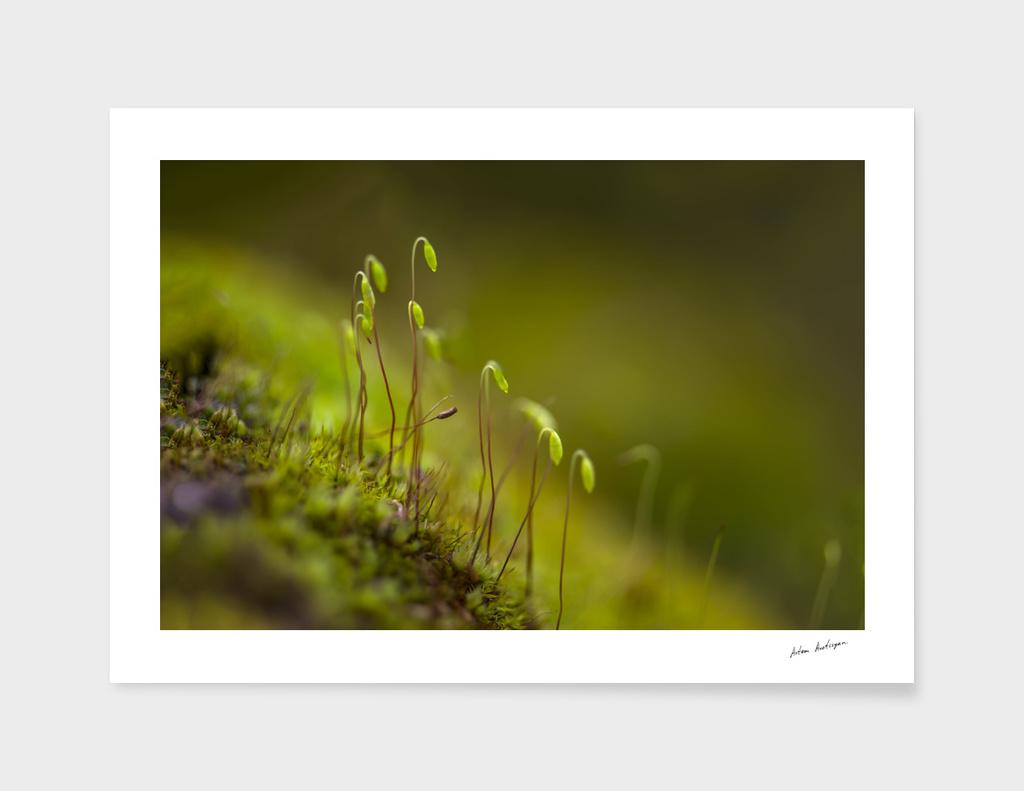 green moss close-up