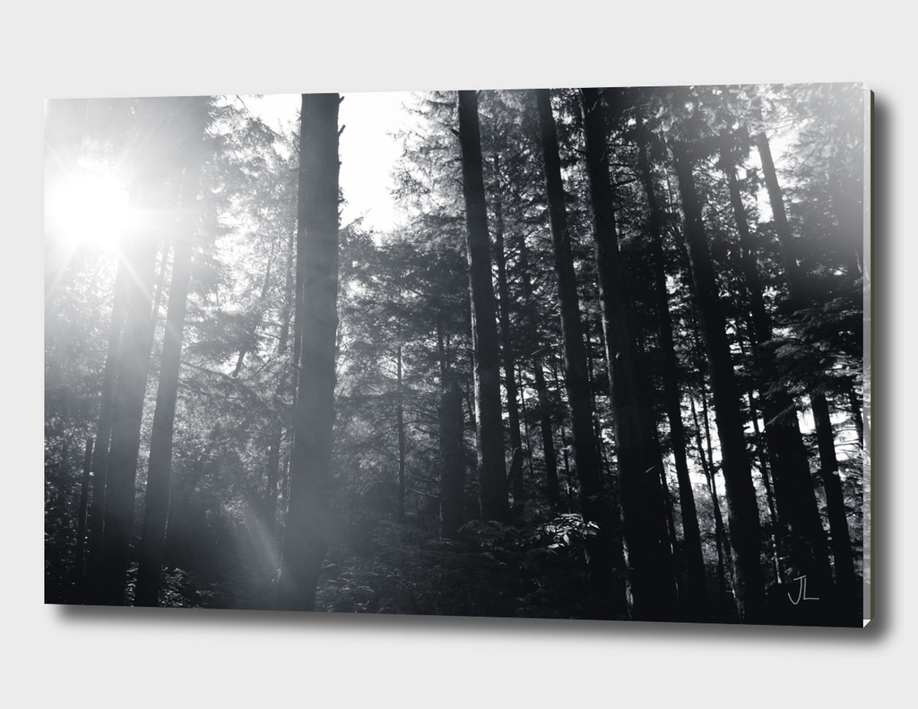Forest B&W