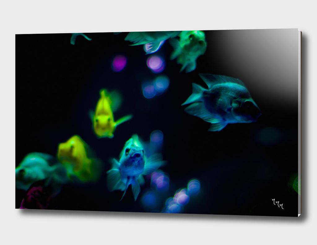 goldfish 04