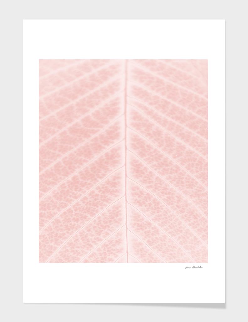 Blush pink leaf close-up