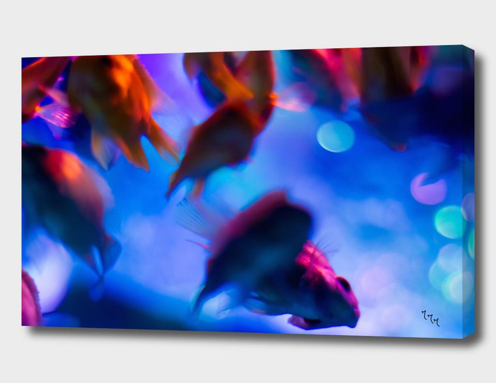 goldfish 06