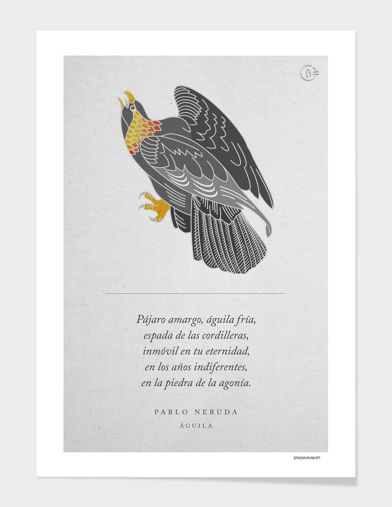 Aquila. Pablo Neruda - Arte degli uccelli.