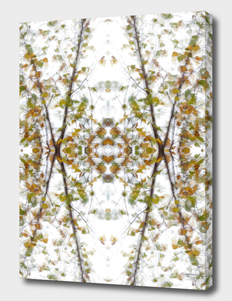 Birch tree fall kaleidoscope