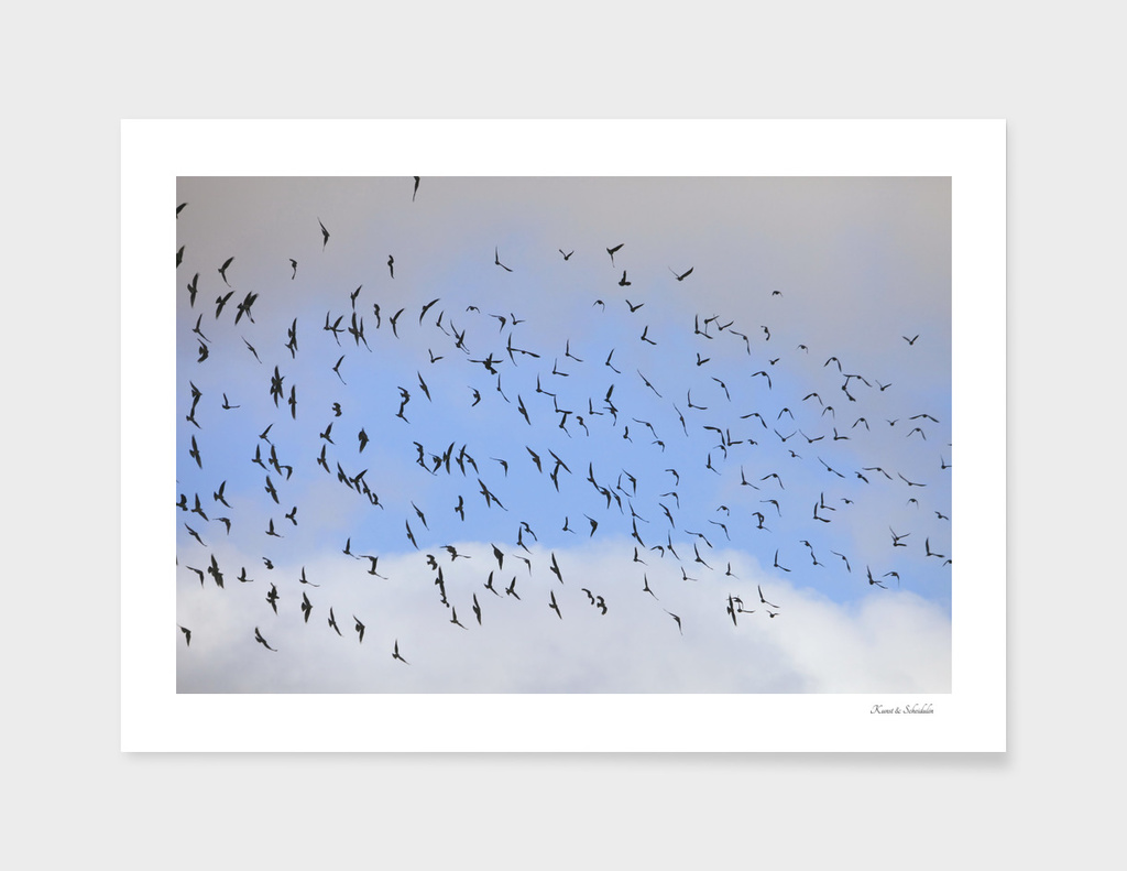A flock of jackdaws soaring through a blue sky