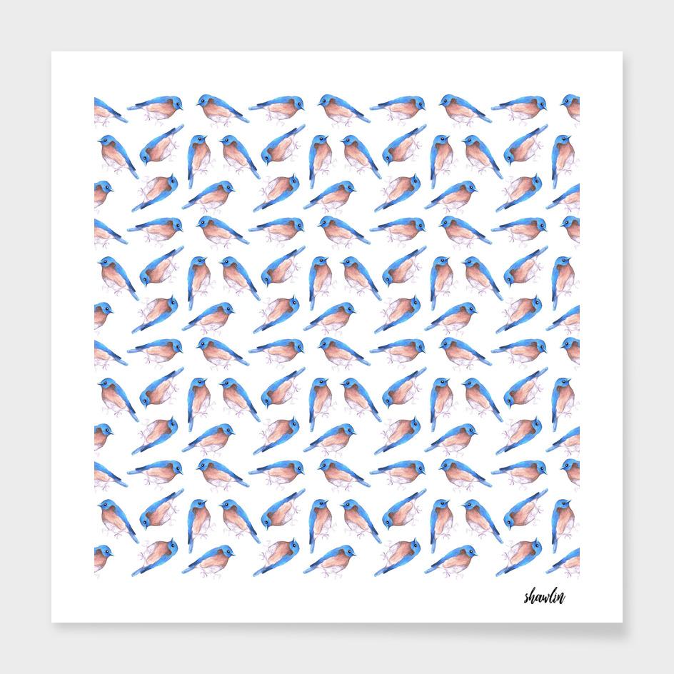 Eastern bluebird or Sialia sialis bird watercolor painting