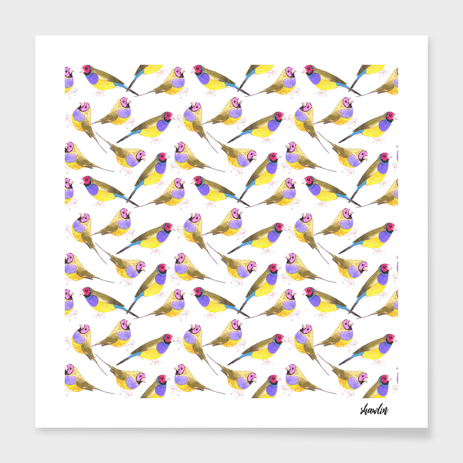 Red headed male Gouldian finch watercolor birds painting