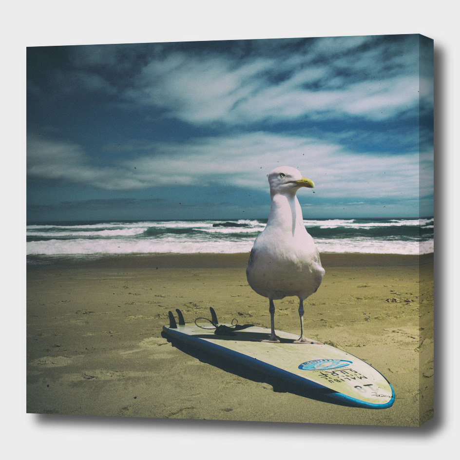 Surfing seagull
