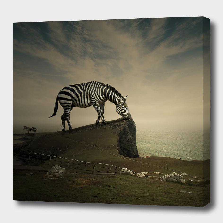 Scottish zebra