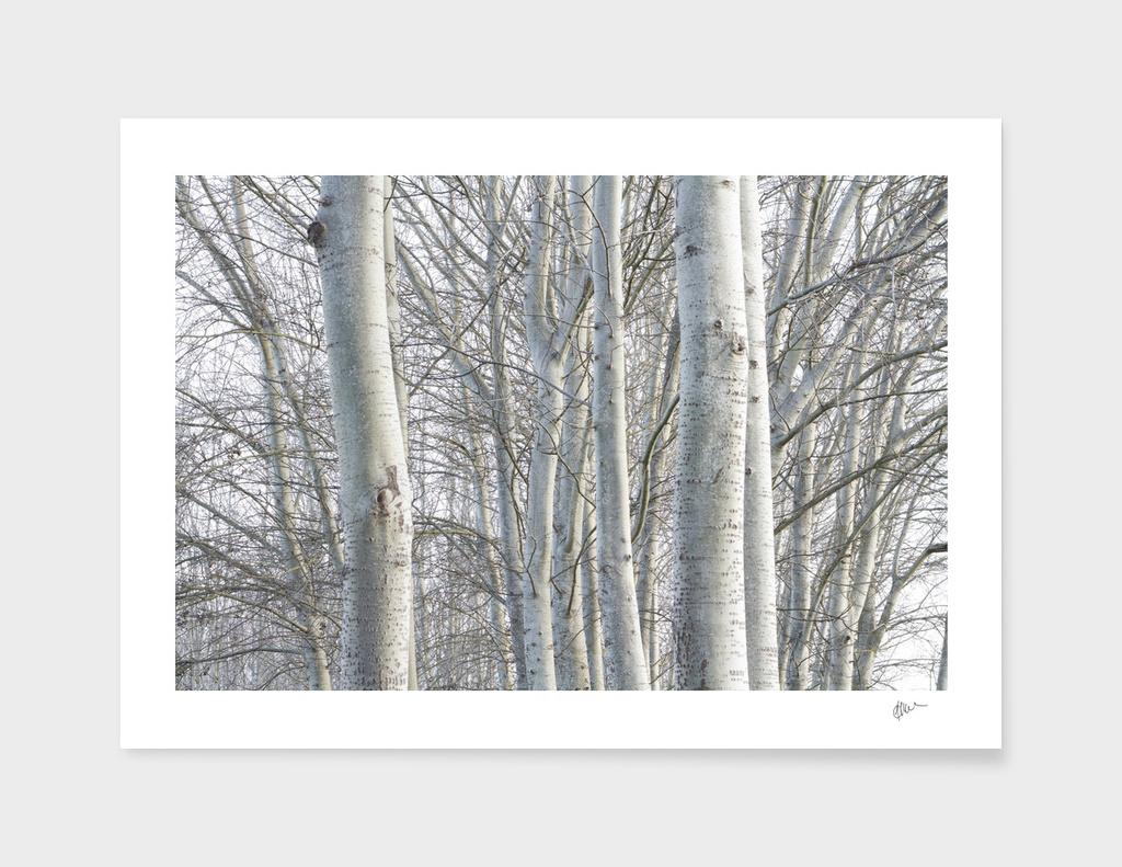 TREES_0016
