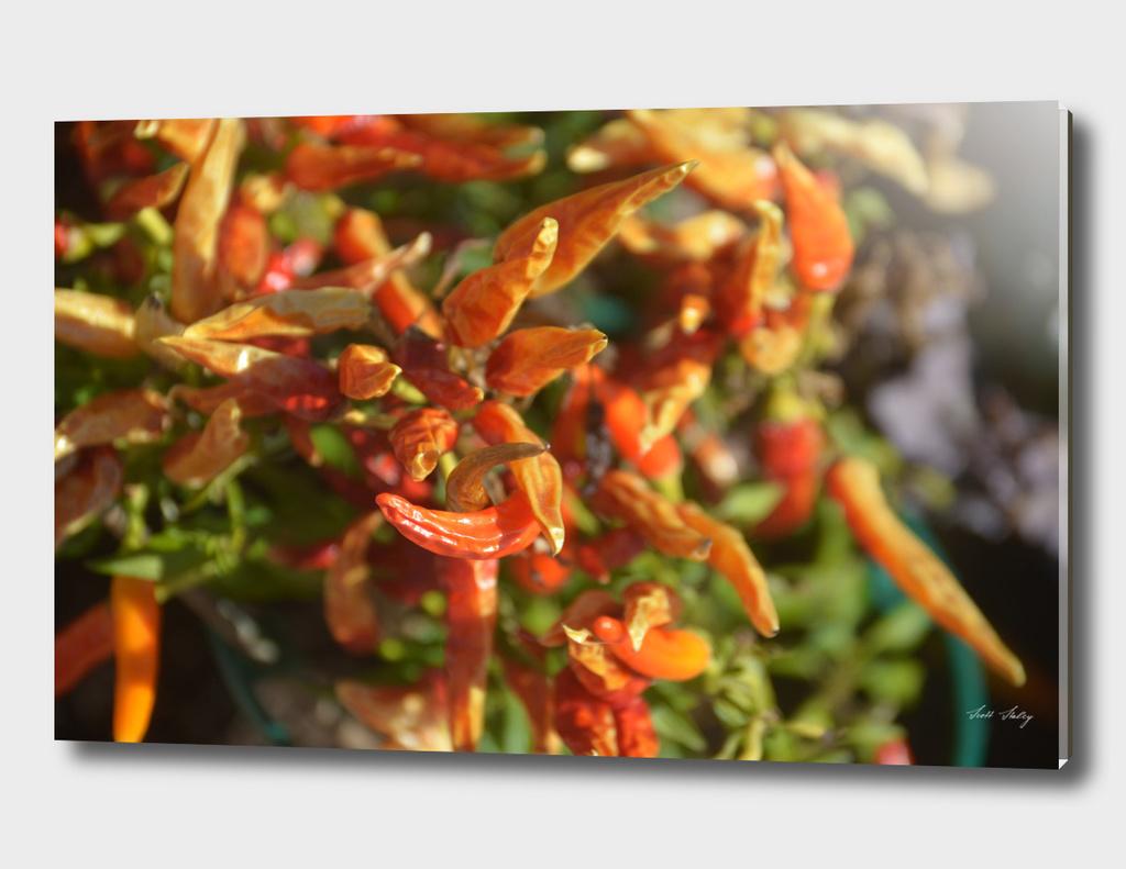 Orange/reds floral