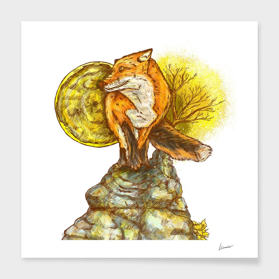 THE FOX IN MY DREAM