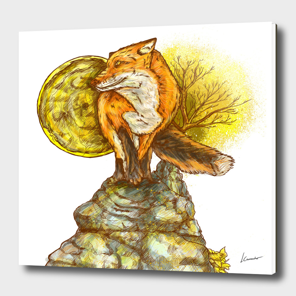THE FOX IN MY DREAM