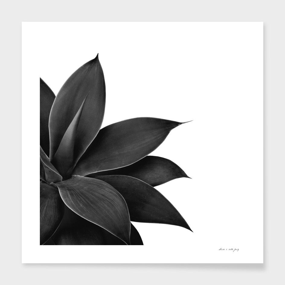 Agave Finesse #13 #tropical #decor #art