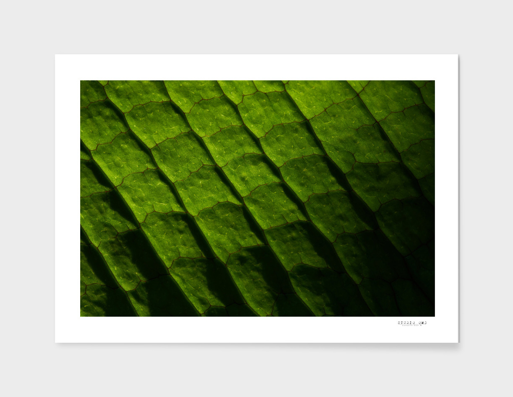 Full frame background of a close-up view of green leaf