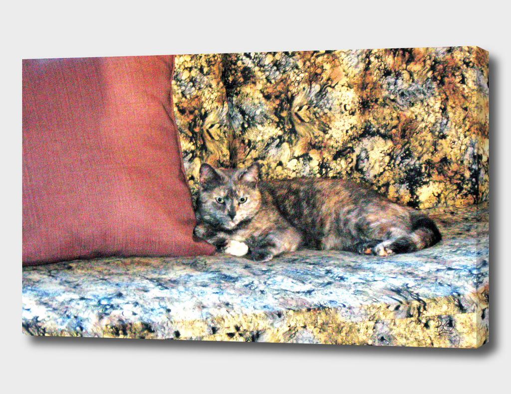 Chloe the Camoflaged Calico Cheshire Cat